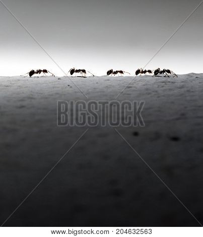 silhouette of five ants. Business concept - Stock Image