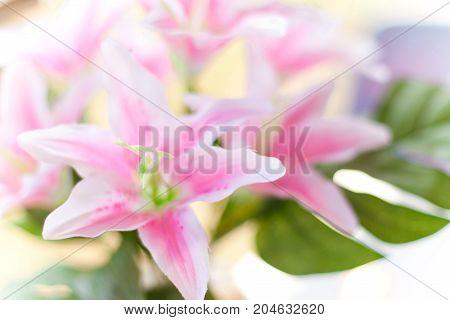 Artificial flower pollen in focus - Stock Image
