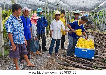 SAMUT SONGKRAM, THAILAND - MAY 22, 2009: Unidentified people work at the orchid farm in Samut Songkram, Thailand.