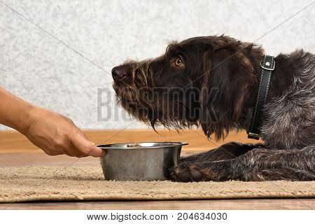 hand of woman holding a bowl with food for dog which waiting meal