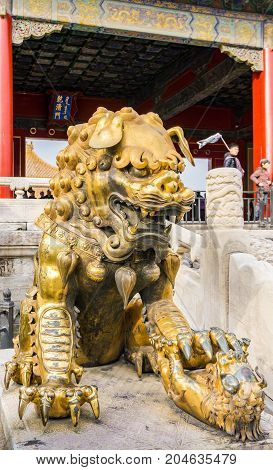 Beijing, China - Oct 30, 2016: Gilded bronze lion with left paw on baby cub at the Gate of Heavenly Purity, or Celestial Purity (Qianqingmen). Forbidden City (Gu Gong, Palace Museum).