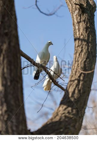White dove on a tree against a blue sky .