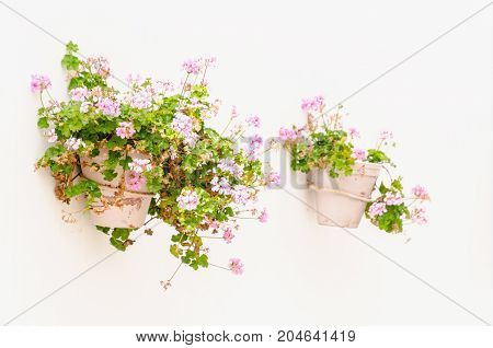 Decorative Plantpots With Pink Geraniums Hanging In The Wall