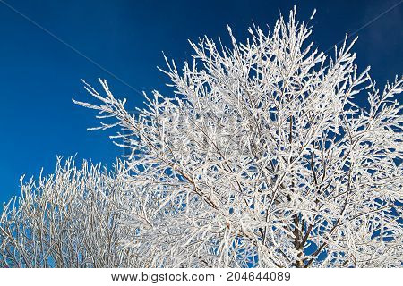 tree branches covered with snow on background blue sky. winter landscape