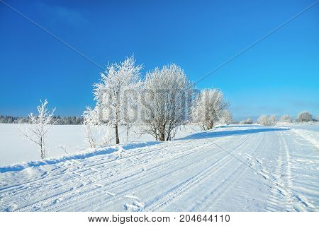 winter rural landscape with road forest and blue sky. Sunny frosty wintry day and path. trees covered with snow