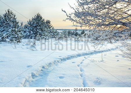 winter rural landscape with forest snow and path. wintry sunrise over snowy field and forest