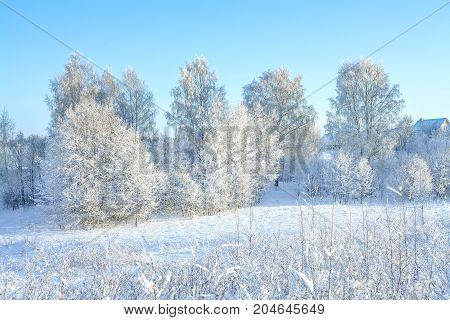 rural winter snowy landscape with forestfieldvillage and blue sky. trees covered with snow. wintry frosty day