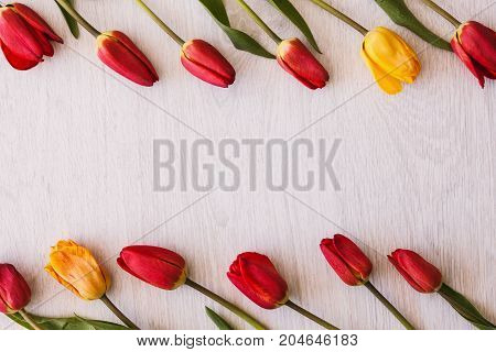 Tulips. Celebration background with free space. International women's day, colorful spring flowers on white backdrop top view, bouquet present closeup, tenderness concept