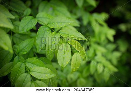 Green bushes abstract background. Leaves texture background
