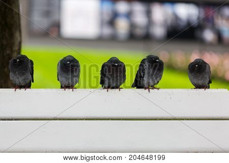 Pigeons are sleeping on the bench in summer