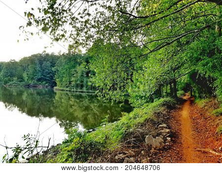 A beautiful lakeside view of a worn tree-lined trail.