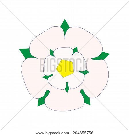Vector illustration in a flat style: White Rose of York also know as Alba Yorkshire Rose. Argent heraldic flower as the seal of the House of York and a symbol of Yorkshire as a whole.