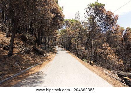 Road To Biokovo Mountain