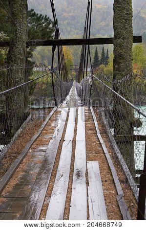 The mysterious bridge on rain. Nature. Forest. Stripes
