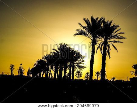 a hidden sun behind some palm trees