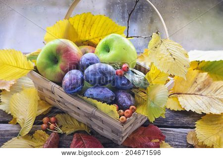 ripe red green apples lie on an old wooden table surrounded by dry autumn leaves wicker basket scattered autumn leaves on an old wooden background wicker basket with prunes