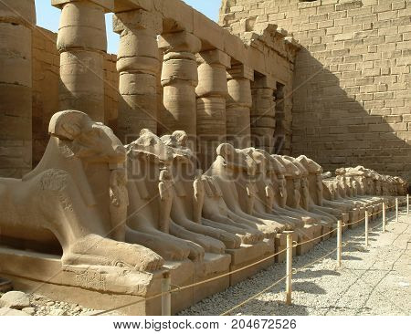 Alley of sphinxes with sheep heads, without people, Thebes, UNESCO World Heritage Site, Egypt, North Africa, Africa
