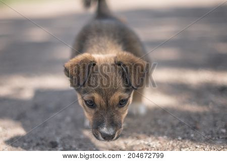 Adorable puppy is laying on the ground and curiously looking in the camera. Soft bokeh on background