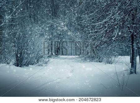 Winter forest, snowy trees and road in snowstorm