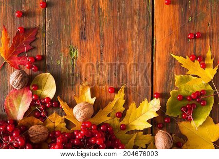 Autumn maple leaves, viburnum and walnuts frame on aged wood background with copy space. Beautiful fall yellow foliage border. Seasonal harvest concept, top view