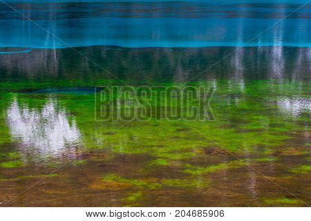 Algae in the water. View of green algae in clear water. The bottom of the pond with vegetation