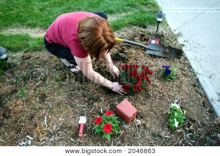 Woman Planting Red Flowers In Garden