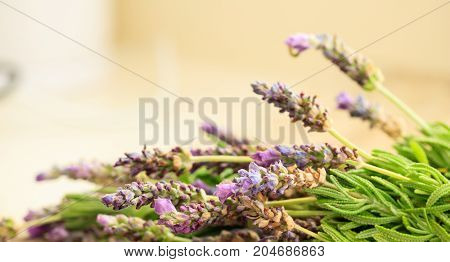 Fresh lavender blossom bunch and copy space