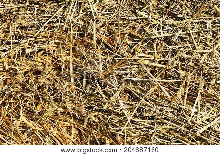 The Hay As A Background Macro