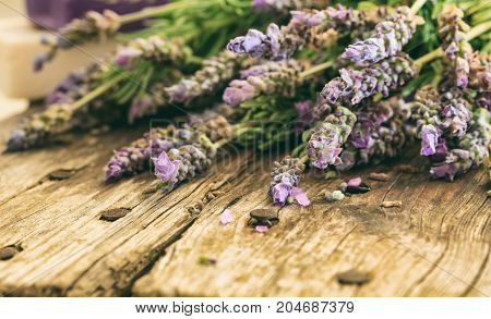 Fresh Lavender And Copy Space