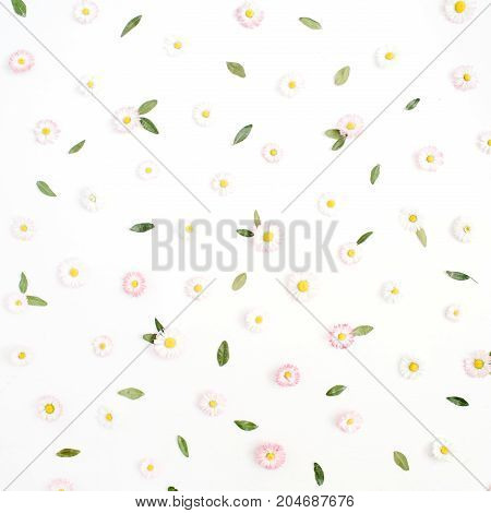 Floral pattern made of white and pink chamomile daisy flowers green leaves on white background. Flat lay top view. Daisy background. Pattern of flower buds.