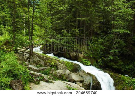 River flowing through a green coniferous forest with waterfall. Kamianka river and Kamianetskyi waterfall in Carpathian mountains, National Park Skole Beskids, Ukraine. Rocks, stones, water
