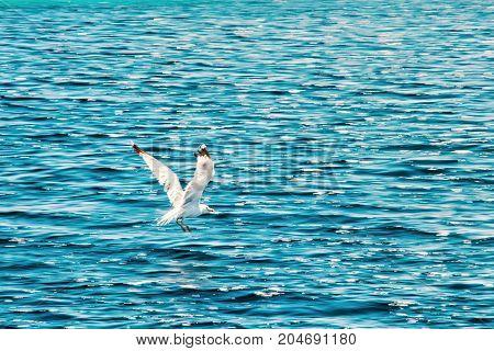 The seagull flies above sea. Natural scene. Adriatic sea Europe. Old photo filter.