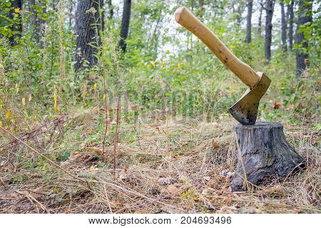 Ax thrust into the stump in the woods