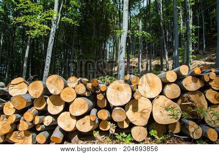 Timber logs stacked in a pile for removal from the forest