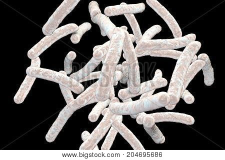 Bacteria Mycobacterium tuberculosis isolated on black background, the causative agent of tuberculosis, 3D illustration