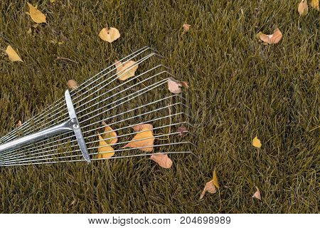 rake collecting grass colored autumn foliage garden tools. Collecting grass clippings. Garden tools.