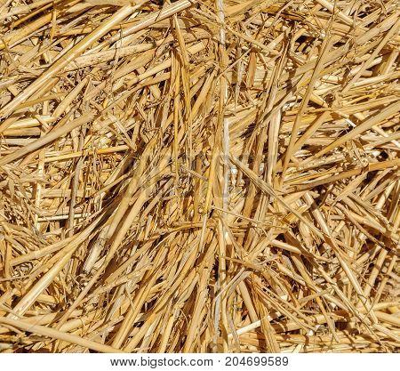 Texture of golden hay in the sun. Stock background of hay.