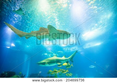 Underwater blue background with sunbeams. Schools of tropical fish and big sharks in large sea water aquarium. Lisbon Oceanarium, Portugal. Tourism, holidays and leisure concept. Copy space.