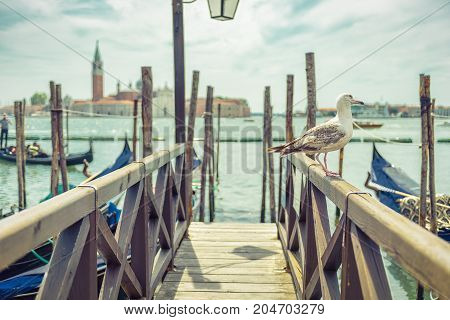The seagull sits on the old wooden pier near St Mark`s Square in Venice, Italy. The selective focus. Saint Mark`s Square is the main square of Venice.