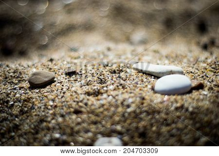 Beauty in the little one. Sea sand hides the millennial history of the existence of life