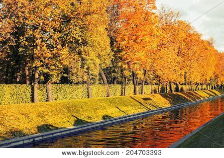 Autumn trees along the city channel in autumn sunny weather. Autumn landscape with golden autumn trees in the autumn city park. Sunny autumn landscape. Autumn nature scene
