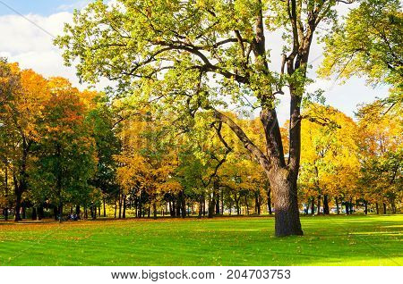 Autumn picturesque landscape. Sunny autumn landscape park with golden autumn trees. Nature autumn landscape scene - yellowed autumn trees in the autumn city park. Sunny autumn landscape