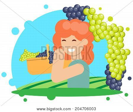 A girl is harvesting grapes in a basket. Vector illustration