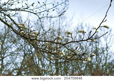 springtime nature wakes up blooming plants floral
