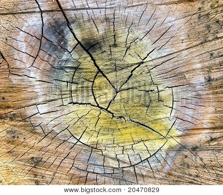 Very Special Cracked Old Wood Cut Texture