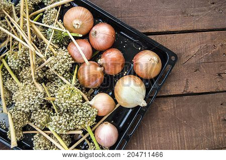 onion seeds, dried onions and seeds, seeds to grow dry onions,