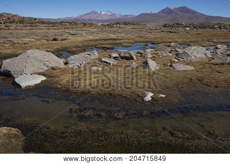 Frozen water in a wetland in Lauca National Park on the altiplano of northern Chile