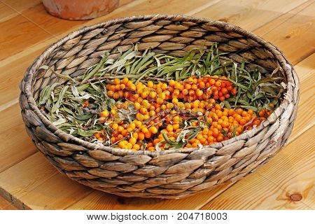 Branches of ripe sea buckthorn in a wicker basket on a wooden table