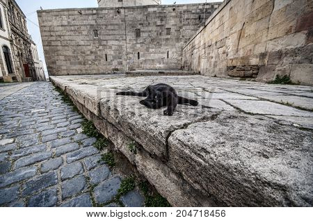 Old Town Of Baku. Street Black Colored Cat At Old Town Street.