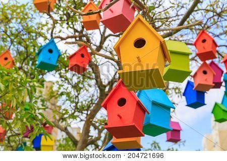 Closeup Birdhouses On A Mandarin Tree